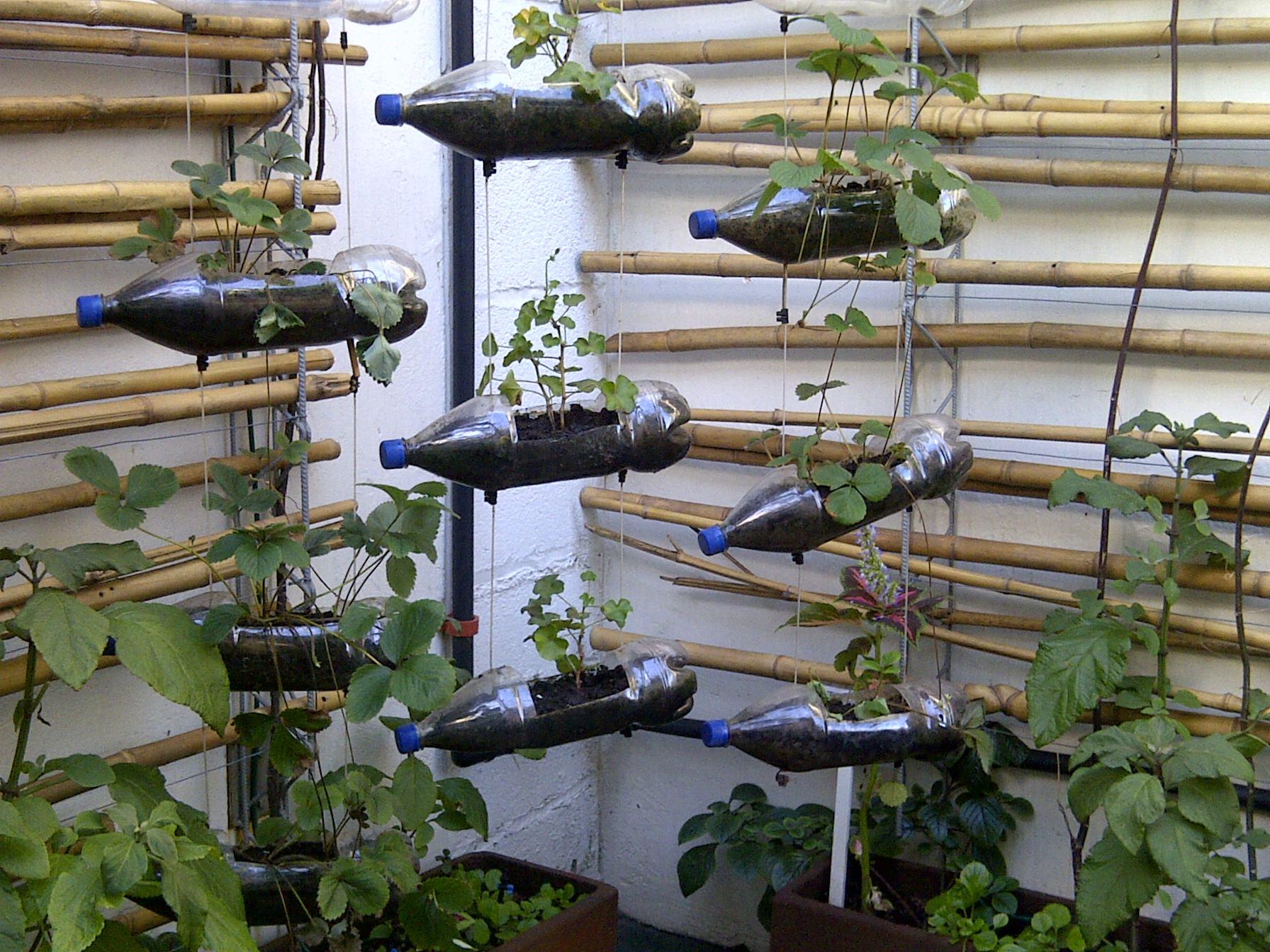 7 Cara Kreatif Bikin Kebun Di Halaman Rumah Go Life Go